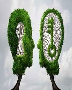 Due alberi a forma di chiave e serratura